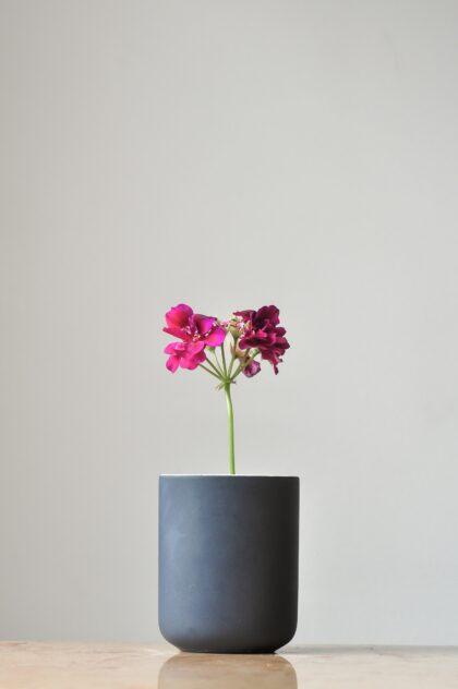 Image by Zeldon Ribeiro on Unsplash